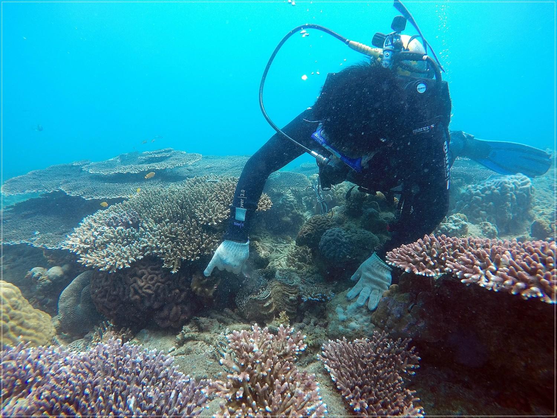 diving Con Dao
