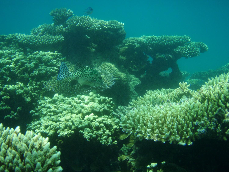 lặn xem san hô Côn Đảo