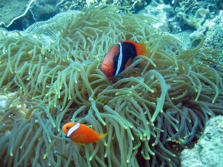 Tuyến tham quan: khám phá đại dương cùng các Công ty dịch vụ lặn (Diving).